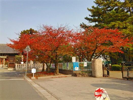 2611-12sakura.jpg